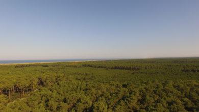 Vue en hauteur de la forêt des Landes