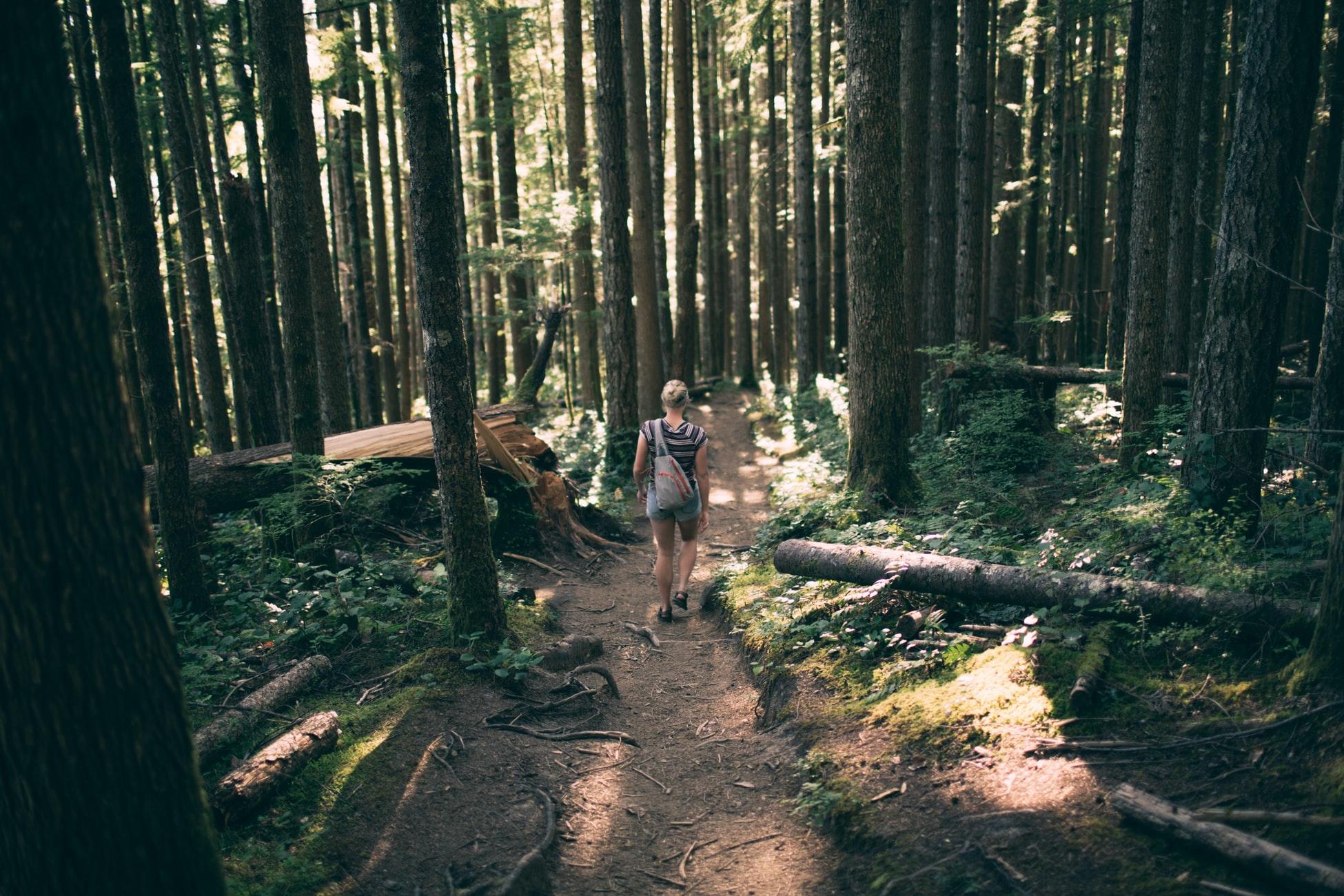 Balade dans la forêt de pin des landes